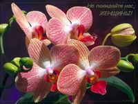 музыкальное поздравление к 8 марта, открытка музыкальная, не покидайте нас женщины, красивая открытка с 8 марта,орхидеи