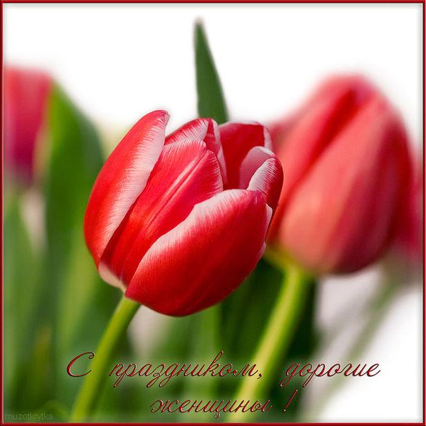 Частушки про девушек к 8 марта,О Женщины,открытка с 8 марта,красные тюльпаны.