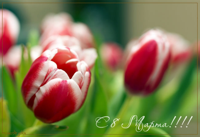 поздравительная открытка 8 марта с кодом,тюльпаны