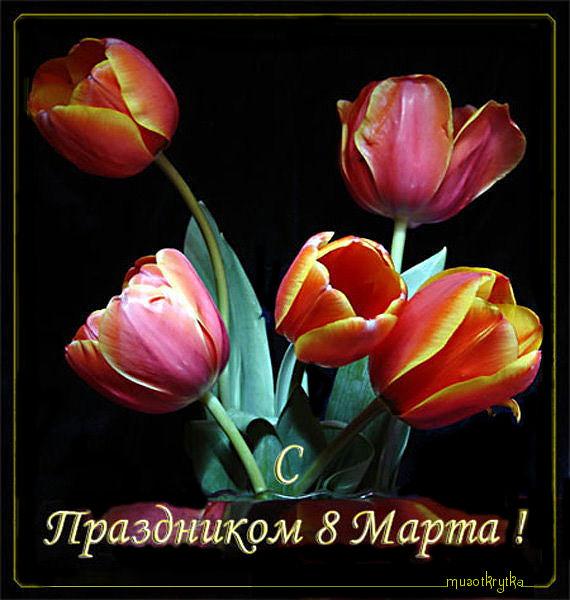 виртуальная открытка к 8 марта с кодом,тюльпаны