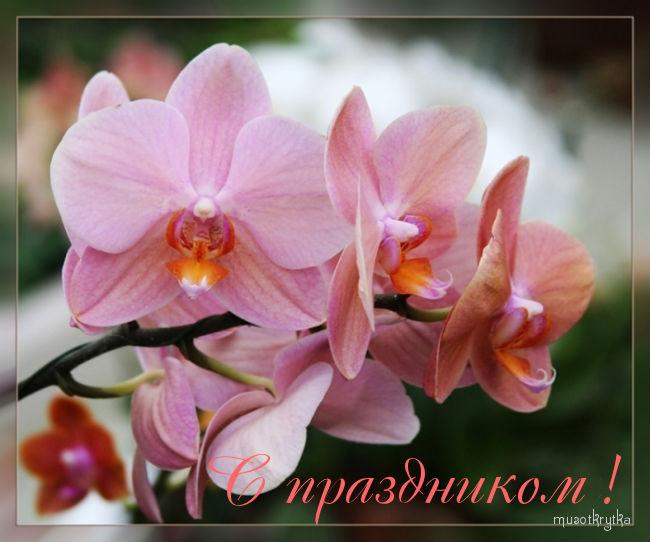 Открытка с 8 марта,орхидея