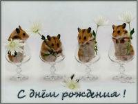 музоткрытка с днем рождения, прикольная открытка с днем рождения, хомяк, цветы