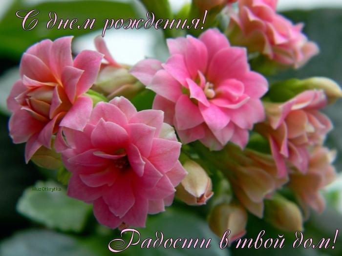Открытки лилии онлайн