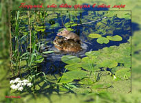 музыкальная открытка для друга, лягушка с крысой, музыкальная открытка с кодом от сайта MuzOtkrytka