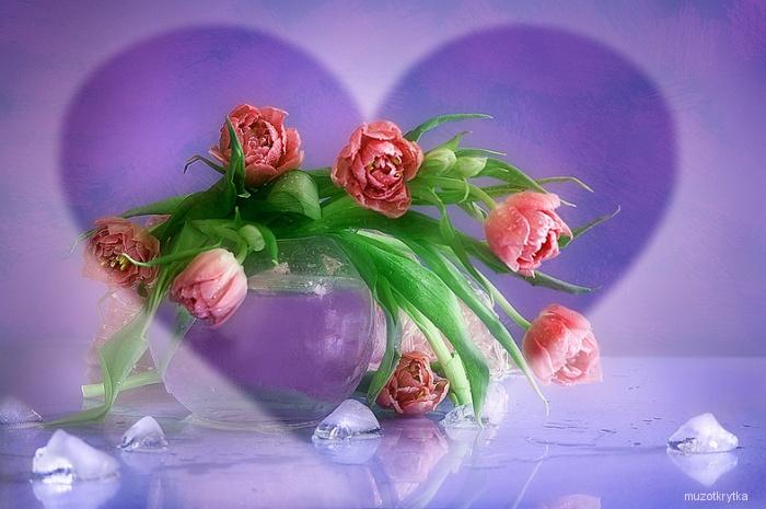красивые тюльпаны, открытка с кодом