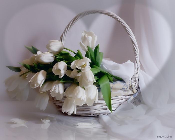 белые тюльпаны в корзине, открытка с кодом