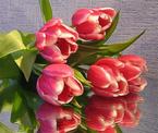музыкальная открытка для любимой, анимация цветы, тюльпаны