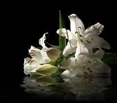 музыкальная открытка для любимой, анимация цветы, лилии