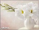 музыкальная открытка с днем матери, открытка маме, красивые белые цветы