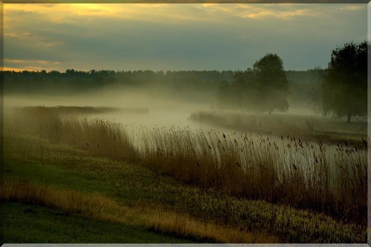 Музыкальная открытка, шуфутинский, сиреневый туман, открытка природа